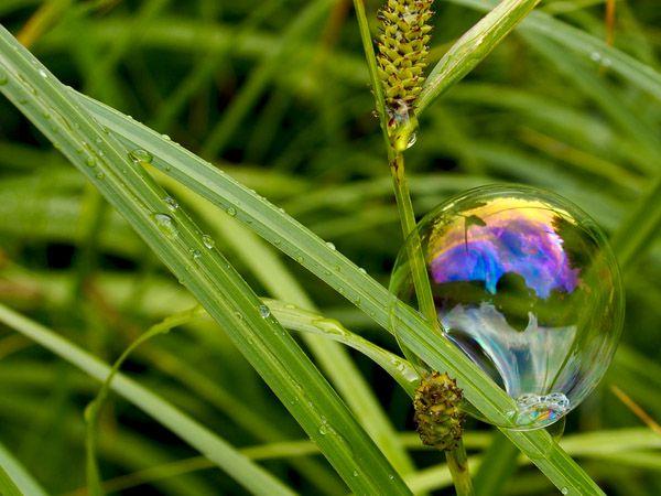 Kas yra ekologiški plovikliai ir kaip juos pasirinkti? l Guoda Azguridienė